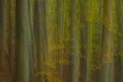 森林印象主义 库存照片