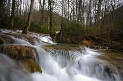 森林原始春天瀑布 免版税库存图片