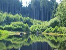 森林反射在池塘 图库摄影