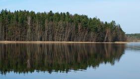 森林反射在池塘 库存照片
