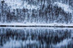 森林反射在湖 库存照片