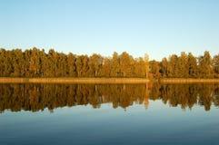 森林反射在水中 库存图片
