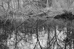 森林反射在水中 免版税库存照片