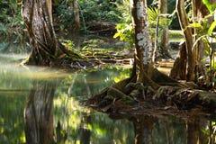 森林反射 免版税库存图片