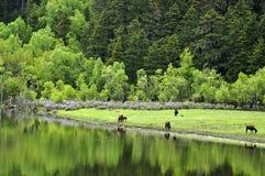 森林反映 库存照片