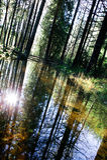 森林反映 免版税库存照片