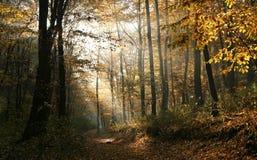 森林发光 库存图片