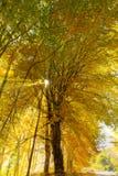 森林发出光线星期日 图库摄影