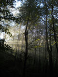 森林发出光线星期日 库存照片