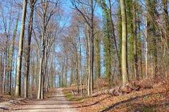 森林叫的'欧登瓦德山'在海得尔堡在德国在一个晴朗的早期的春日 免版税库存图片