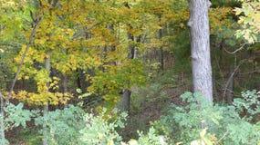 森林召唤 免版税库存图片