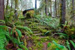 森林台阶在俄勒冈 库存图片