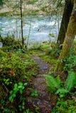 森林台阶在俄勒冈 免版税库存照片