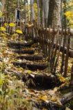 森林台阶 库存照片