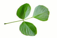 森林叶子的新鲜的绿色火焰 免版税图库摄影