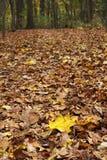 森林叶子线索 免版税库存照片