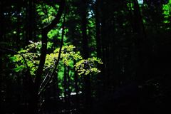 森林叶子 库存图片