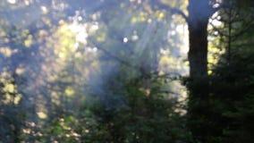 森林和一些烟在树之间 股票视频