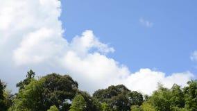 森林和云彩 股票录像