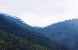 森林和利古里亚山在层数 库存图片
