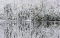 年轻森林和反射在寂静的湖浇灌 免版税库存图片