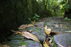 森林和叶子 免版税库存照片