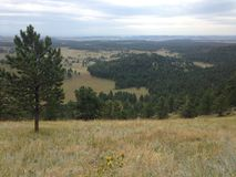 森林和大草原山坡视图 免版税库存图片
