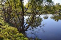 森林和天空在森林湖的镇静大海被反射 在美丽的鸟云彩之上颜色及早飞行金子早晨本质宜人的平静的反映上升海运一些星期日 库存照片