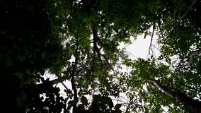 森林和天空蔚蓝低角度视图与风吹 森林地树和绿色叶子向上观点流动在风的 股票视频