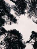 森林和天空 免版税库存照片