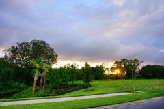 森林和太阳集合 图库摄影