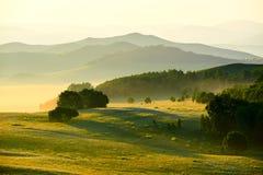森林和小山 免版税库存照片