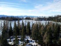森林和山自然地区 免版税图库摄影