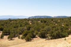 森林和山 免版税图库摄影