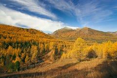 森林和山 免版税库存照片