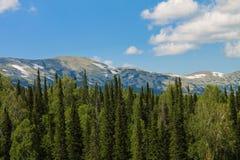 森林和山 图库摄影