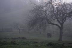 森林和山 免版税库存图片