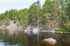 森林和岩石在湖 免版税库存照片