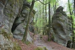 森林和岩石迷宫 免版税库存照片