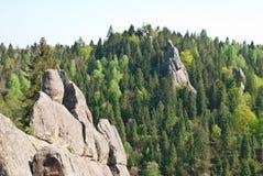 森林和岩石 免版税库存图片
