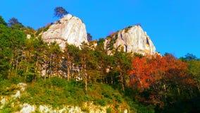 森林和岩石 库存图片