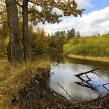 森林和森林河的背景风景美丽的景色在10月 免版税库存照片
