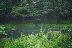 森林和池塘 图库摄影
