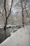 森林和河在一个公园在冬天 库存图片