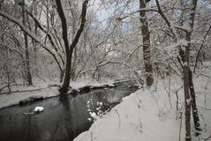 森林和河在一个公园在冬天 图库摄影