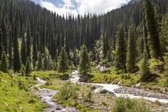 森林和河 免版税库存图片