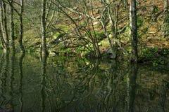森林和河 图库摄影