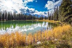 森林和湖 免版税库存照片