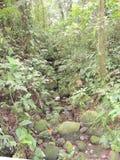 森林和石头 免版税库存照片