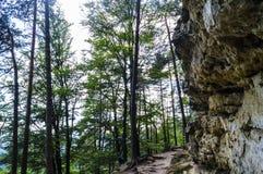 森林和砂岩岩石 库存照片